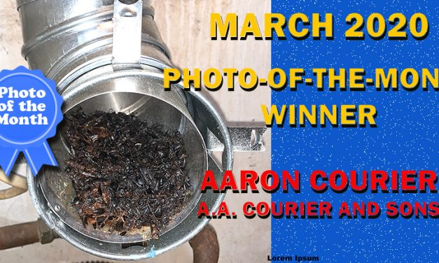 March 2020 Photo-of-the-month winner